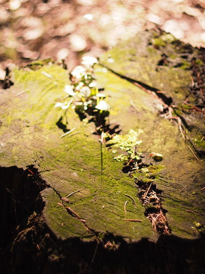 Stump Old Tree Nature Nature_collection Nature Photography EyeEm Nature Lover Light And Shadow Moss Oldlens Nikkor