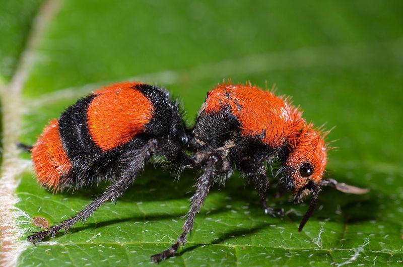 Close-up of ladybug on orange leaf