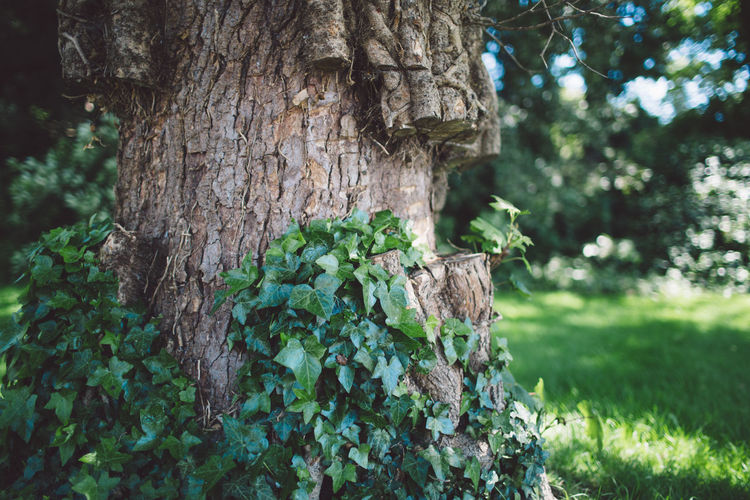 Beauty In Nature Close-up Day Epsom Focus On Foreground Green Color Growth London Nature Nature No People Outdoors Plant Summer Textured  Tree Tree Trunk