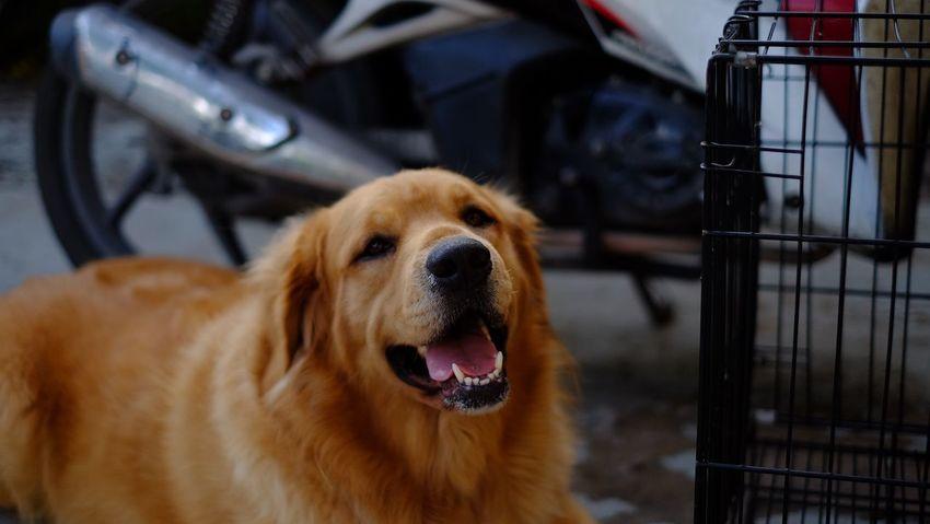 Pets One Animal Dog Animal Themes Mammal Domestic Animals No People