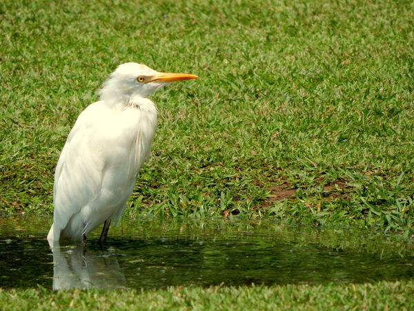Bird One Animal Animal Wildlife Animals In The Wild Beak Grass Animal Themes Water Outdoors Day Nature Stork No People Beauty In Nature Travelphotography Nikon L830 Coolpix Nature