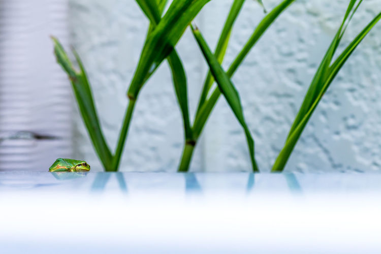 Close-Up Of Green Frog By Plant