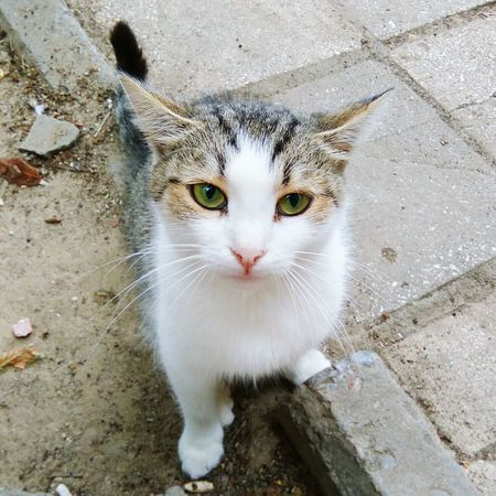 Cat Animal Meow🐱 Animal Head  Green Eyes Cats Of EyeEm Cats Cat Eyes Eyes Watching You Eyes Eyes On YOU!! Urban Meow