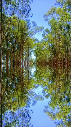 Tree Reflection Nature Sky No People Growth Blue Tranquility Beauty In Nature Backgrounds Outdoors Day Green Color Scenics GoodTimes Summertime EyeEm Best Shots