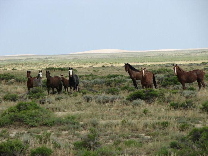 Animals In The Wild EyeEm Nature Lover Wild Animal Wild Horses Wild Life Wildlife & Nature Wyoming Wyoming Adventure