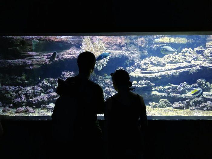 A couple at Cretaquarium Shadows Couple Romantic Pixelated Men Device Screen Silhouette Women Watching Aquarium Females Sea Life First Eyeem Photo