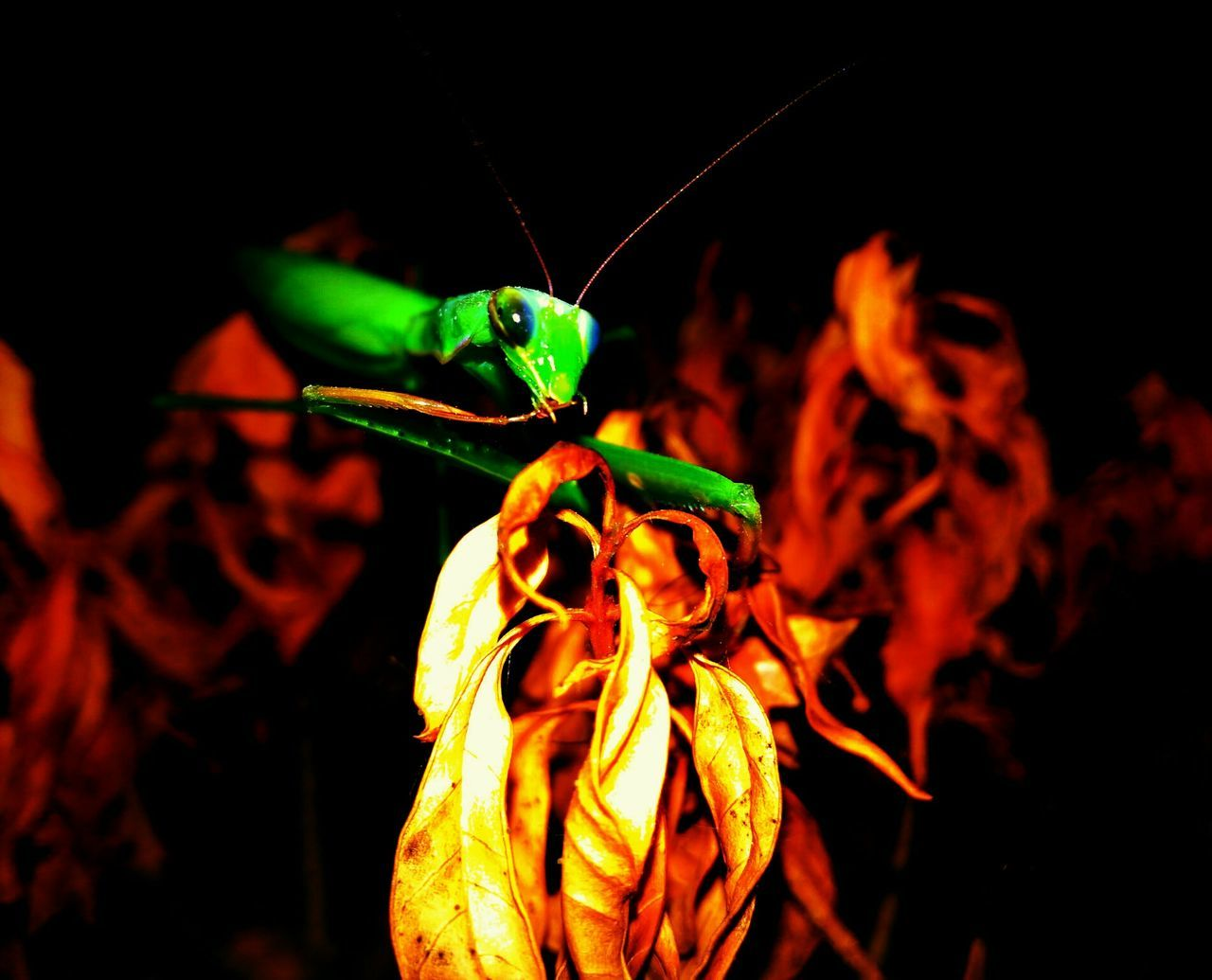 animals in the wild, animal themes, one animal, insect, night, no people, close-up, outdoors, leaf, nature, flower