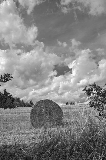 Plant Cloud - Sky Field Sky Land Bale  Landscape Hay Agriculture Environment Tree Tranquil Scene Tranquility Nature Farm Rural Scene Rolled Up Scenics - Nature Day Beauty In Nature No People Outdoors Stoppelfelder Nach Der Ernte Rundstrohballen