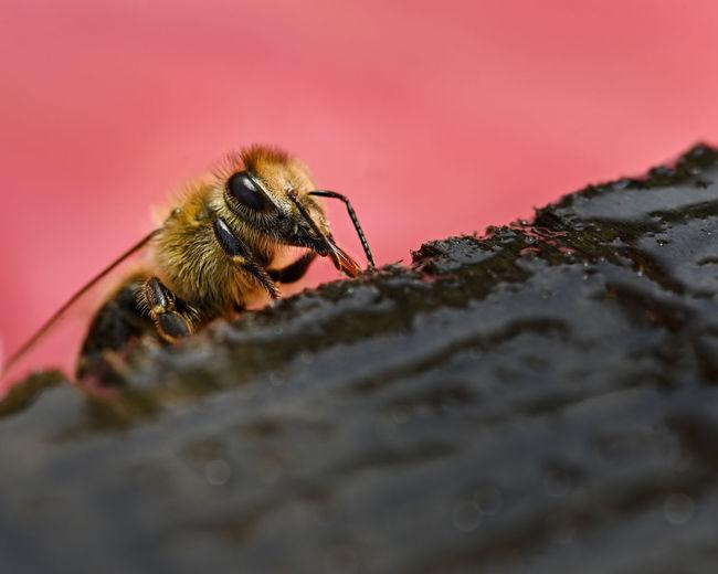 bee drink water