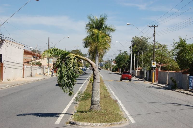 Transportation Tree Plant Road Motor Vehicle Car Mode Of Transportation Street Sky Nature Land Vehicle City Day Palm Tree Cable Electricity  Tropical Climate Power Line  No People Architecture Outdoors