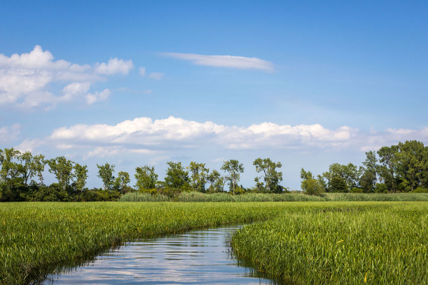 Stoney Island passage Detroit River Marsh Stoney Island Beauty In Nature Green Color Growth Landscape Michigan Outdoors Nature No People Reeds Rural Scene Scenics Tranquil Scene Tranquility Waterway