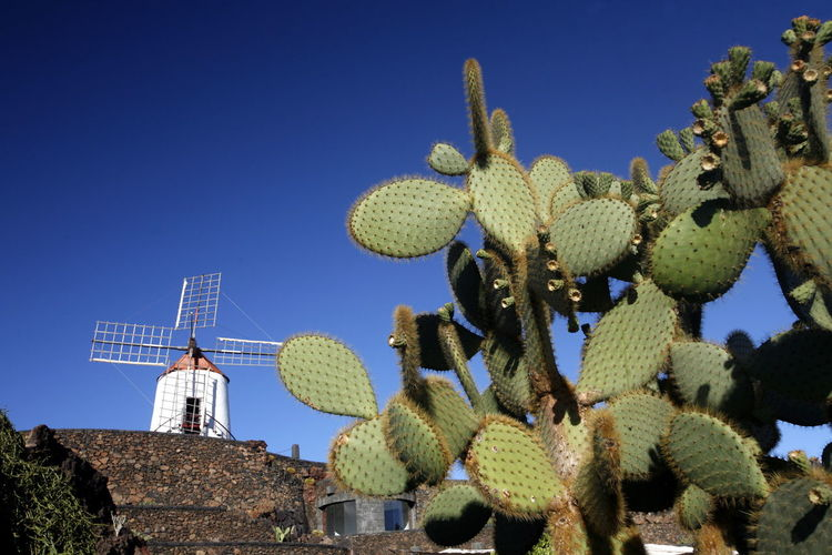 Low Angle View Of Cactuses Against Traditional Windmill