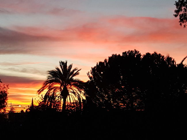 Morning Sky Sunrise Xmas Time EyeEm Best Shots EyeEmNewHere EyeEm Gallery EyeEmBestPics Eye Tree Silhouette Nature Beauty In Nature Dramatic Sky Scenics Tree Area