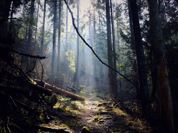 Way Through The Woods, Omberg, Sweden. Nature Forest Landscape Light And Shadow Tranquility Pathway Beauty In Nature FujiX100T Spring The Great Outdoors