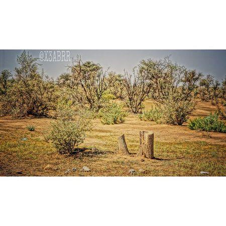 حطب احتطاب تخريب ارشيفية hdr nature photos تصويري صورة كشته السعودية sonyalpha sony alpha wood followme saudiarabia السعوديه ksa l4l PicsArt