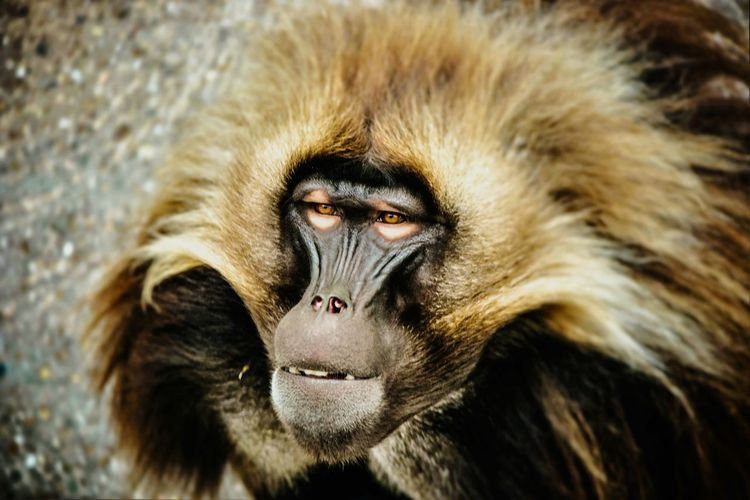 Monkey Nature First Eyeem Photo Check This Out Eye4photography  Affe EyeEmBestPics Capture The Moment Affen Lustig No People EyeEm Best Shots Animals In The Wild Animal Wildlife Cheese Eye4photography  EyeEm Gallery Eye4photography