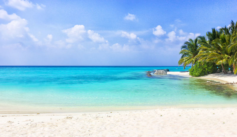 Tropical beach on the Maledives Indian Ocean Palms Romantic Travel Tropical Paradise Beach Blue Destination Idyllic Malediven  Maledives Nature Palm Tree Paradise Relaxation Sand Scenics Sea Sky Tranquility Tropical Tropical Climate Vacations Water White Sand