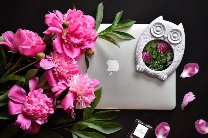 MacBookPro MacBook Pion Owl Dolce & Gabbana Photoframe