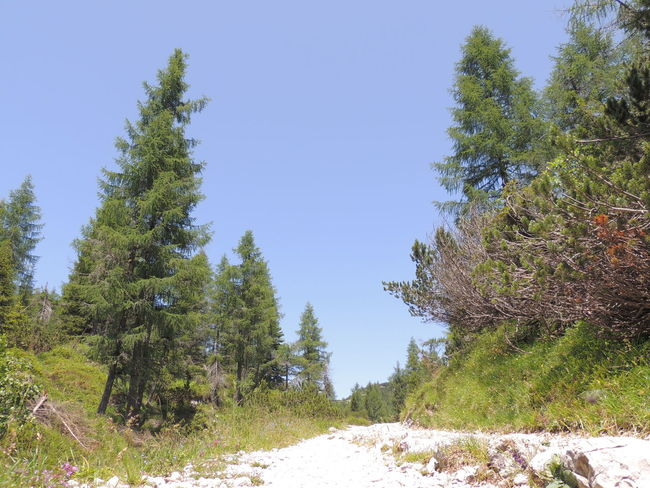 Asiago Nature Photography Nature_collection Road Sky_collection Trees And Sky Treescollection Walk Whiteroads