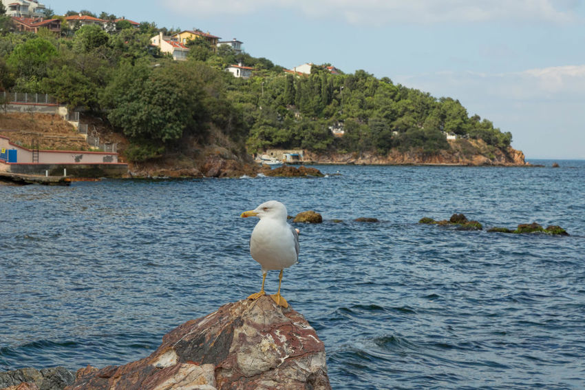 Marmara Sea Beauty In Nature Bird Blue Cloud Day Nature No People Outdoors Rippled Rock - Object Scenics Seagull Sky Tranquil Scene Tranquility Tree Turkey, Burgazada, Marmara Sea, Istanbul, Sea, Island, Princes's Island Water Wildlife