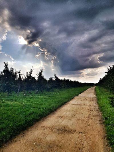 Sky Tree Agriculture Rural Scene Field Sky Landscape Cloud - Sky