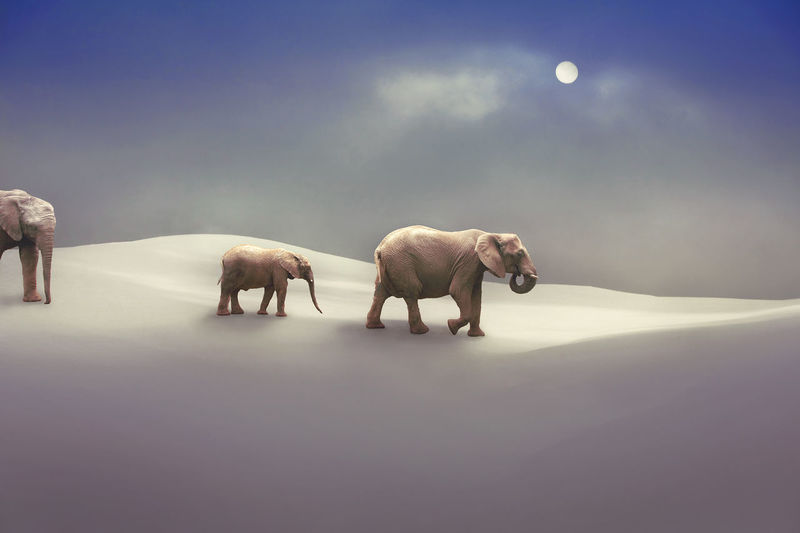 Ice Age Antarctica ArtWork Desert Fairytale  Fiction Ice Immigration Impression Nature Travel Trip Arctic Climate Elephant Freeze Glacier Impressionism Mammal Migrate Polaroid Snow Story Summit Sun Wildlife