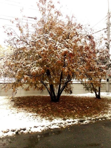 Snow ❄ Snow Day Snowy Trees Snow Covered