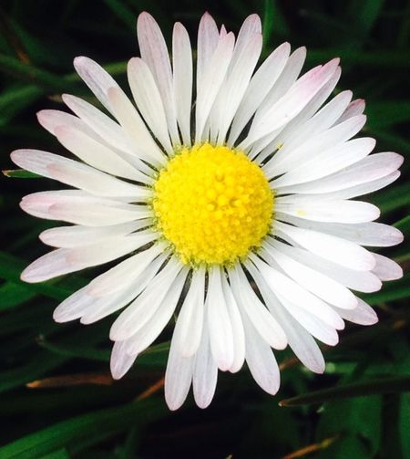 Dasiey Flowers Taking Photos Hello World