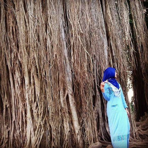 Pohon beringin di keraton Kaibon Banten. Rasanya merinding gimanaa gitu foto ditempat ini 😅 Uintrip Uintraveller Jalan2terus Mainsebentar Banten Keraton Keratonkaibon Kaibonbanten Jalanjalan Jalansore