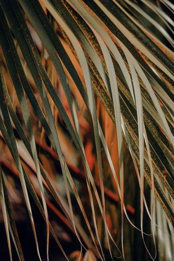 Detail shot of plants