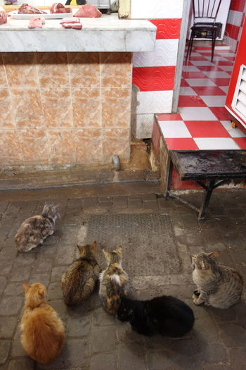 Animal Animal Themes Cat Domestic Animals Food Market Meat Shop Medium Group Of Animals No People Red Checkers Red And White Food Stories