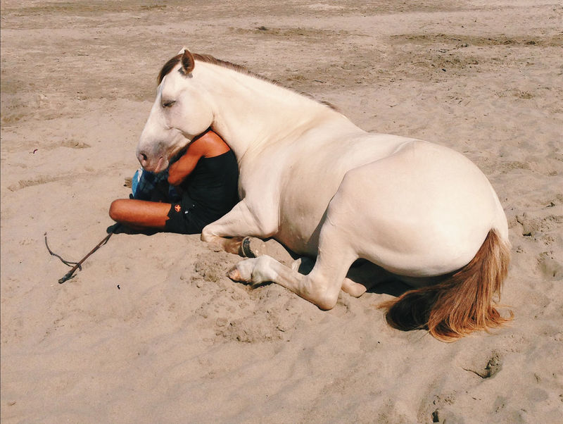 Alertness Animal Animal Head  Beach Camargue Curiosity Day Horse Mammal Man Man And Horse One Animal Relaxation Relaxing Sand Side View Zoology