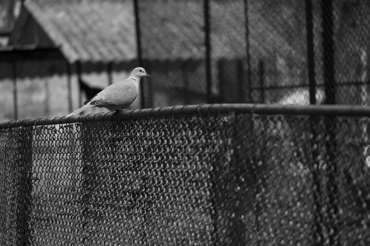 Bird perching on metal fence against wall