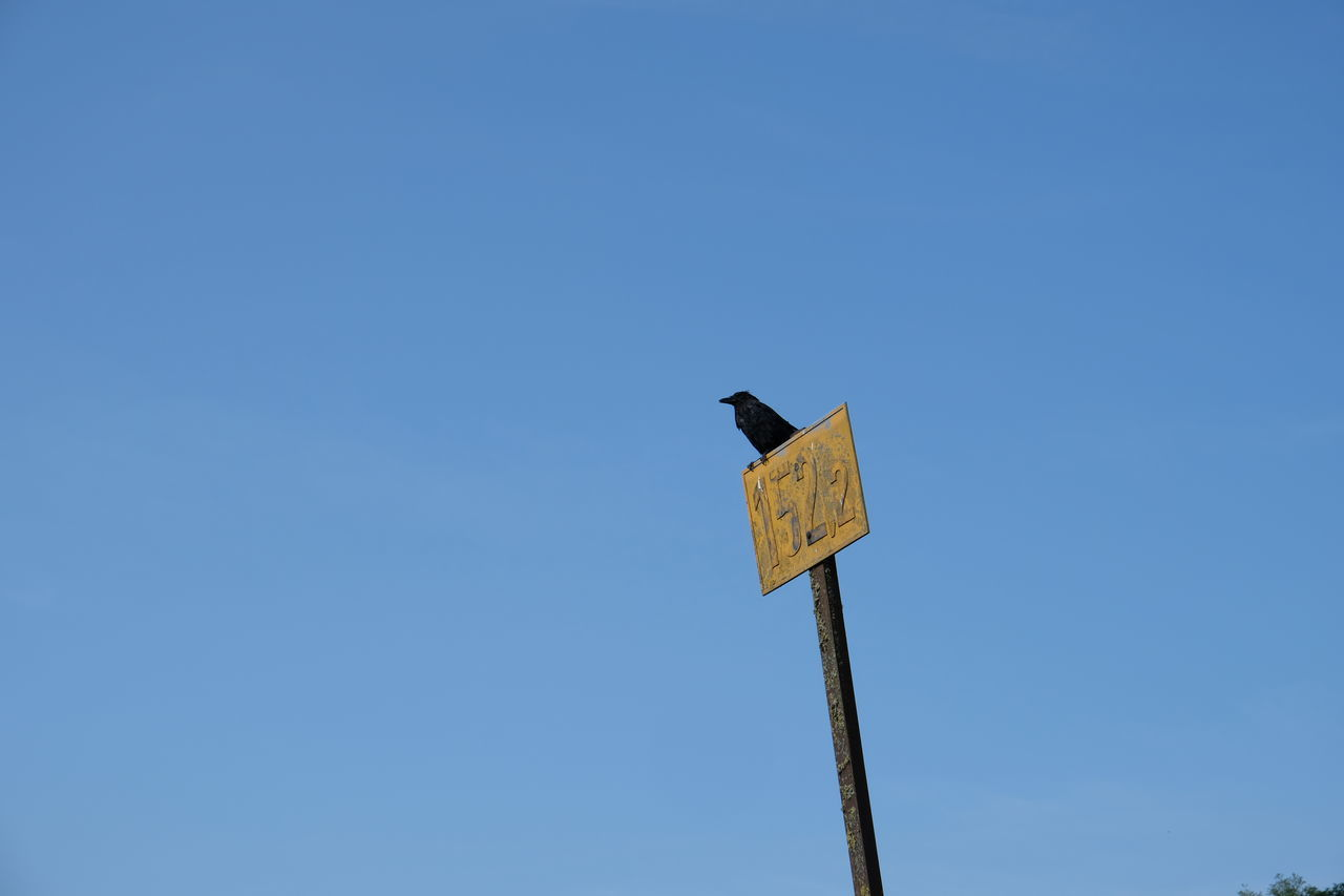 low angle view, clear sky, sky, sign, communication, copy space, perching, blue, no people, vertebrate, guidance, bird, animals in the wild, animal wildlife, road sign, nature, day, animal themes, animal, information, outdoors, wooden post