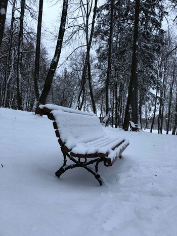 Snow Winter Cold Temperature Weather Tree White Color Nature Branch Outdoors Extreme Weather Tranquil Scene Landscape Tranquility Cold Bare Tree Beauty In Nature No People Scenics Frozen Day