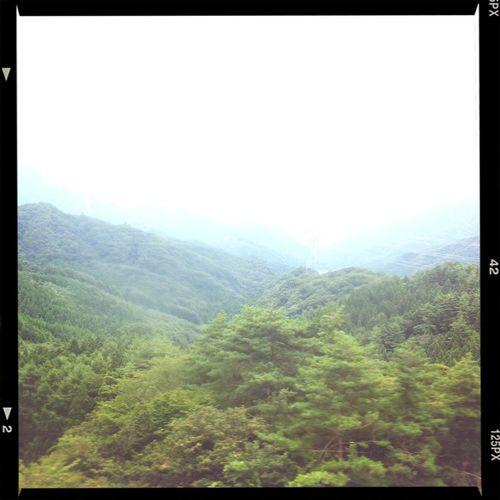 Forest Trip Japan