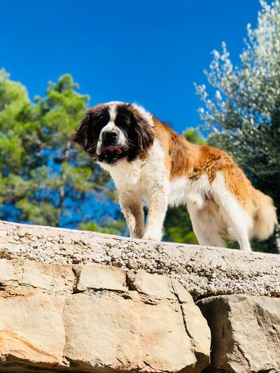 DOGGIE Animal Themes One Animal Mammal Animal Vertebrate Pets Domestic Animals Dog Canine Sunlight Domestic Day No People Nature Sky Outdoors Blue Land Focus On Foreground Plant