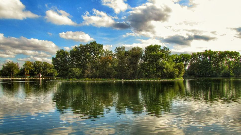 Pond Schwan  Schwanenteich Beauty In Nature Day Lake Nature No People Outdoors Reflection Scenics Sky Tranquility Tree Water