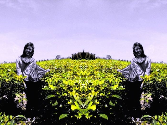 Green Tea Sidamanik Northsumatera Mirroreffect👸