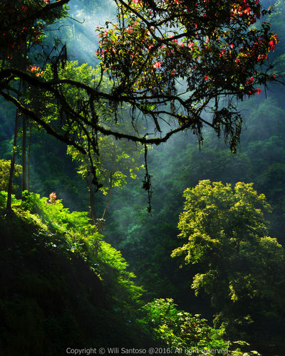Lush in Natural Light Beauty In Nature Branch Green Leaf Lush Foliage Nature Rays Of Light Scenics Tranquil Scene Tranquility First Eyeem Photo