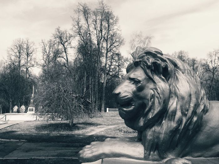🦁 Good evening, friends 🙋🏻✨ Lion Lions Lionhead Statue Statues Architectural Detail Architecture_bw Park Parks Tree Trees Tree_collection  Animals Animal Blackandwhite Black And White Black & White Blackandwhite Photography Black&white Black And White Photography Blackandwhitephotography Exceptional Photographs Monochrome Discover Your City Streetphotography