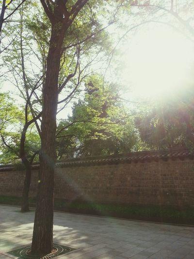싱그럽다. 초록을 보니 숨통이 트인다:) Walking Around Relaxing Seoul Hello World