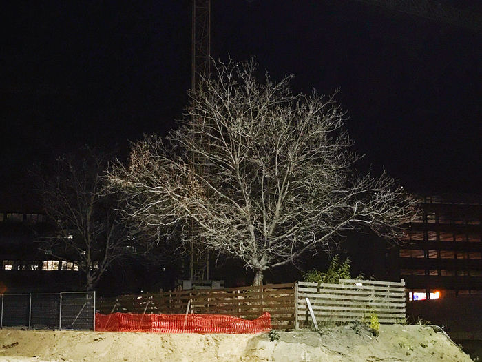 Illuminated trees by building against sky at night