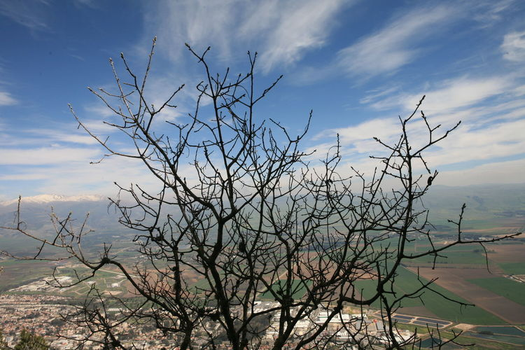 Amazing Landscapes of Israel, Views of the Holy Land Sky Cloud - Sky Beauty In Nature Plant Tranquility Bare Tree Tranquil Scene Scenics - Nature Nature Tree Branch No People Non-urban Scene Outdoors Day Dead Plant Water Land Growth Environment