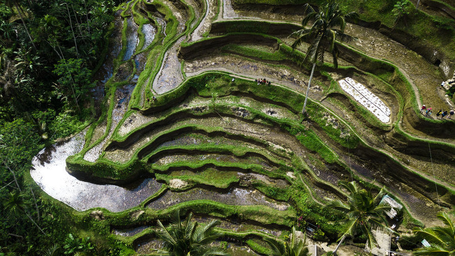 Rice Architecture Beauty In Nature Close-up Day Green Color Growth High Angle View Land Moss Nature No People Outdoors Plant Plant Part Rice Fields  Scenics - Nature Tranquility Tree Water Wet
