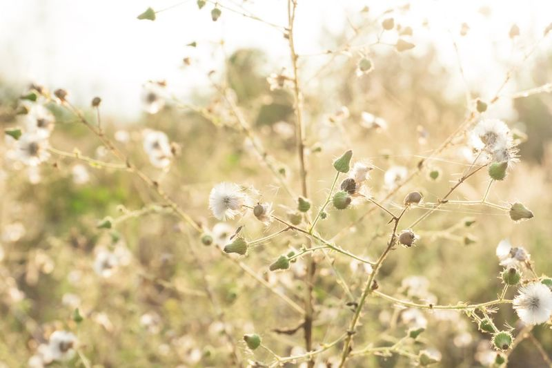 Plant Fragility Vulnerability  Focus On Foreground Growth Day Nature Flower Outdoors Field Tree Beauty In Nature Close-up No People Flowering Plant White Color