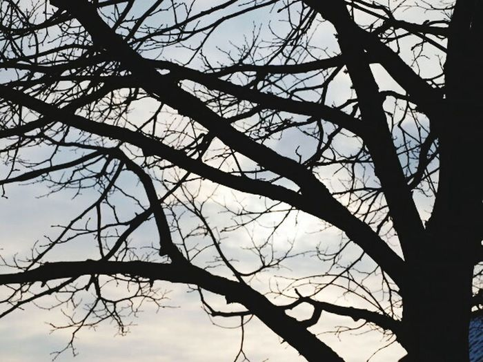 Branches Contrast Sky Wood Naked Trees Winter