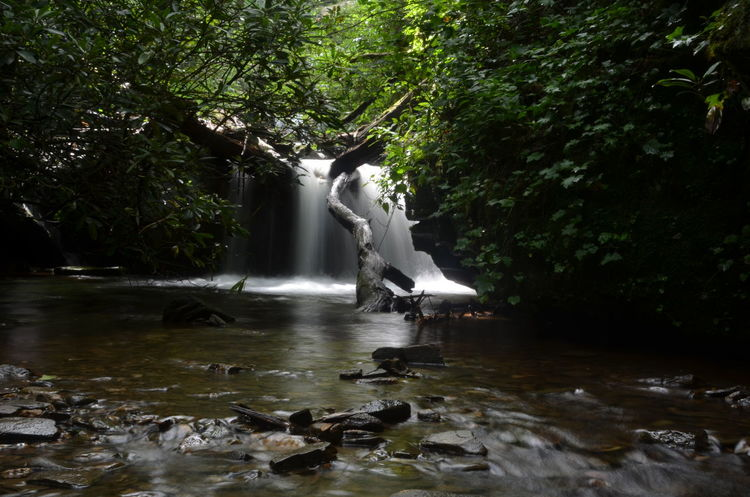 Animal Animal Themes Animal Wildlife Animals In The Wild Bird Day Flowing Flowing Water Forest Growth Long Exposure Motion Nature No People Outdoors Plant Stream - Flowing Water Tree Vertebrate Water Waterfront