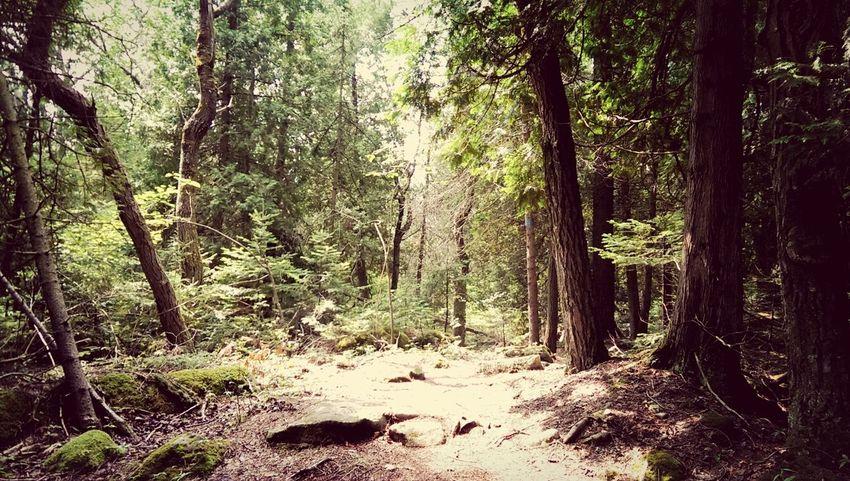 Bruce Trail, Tobermory, Ontario, Canada - Relaxing Hiking Taking Photos Enjoying Life