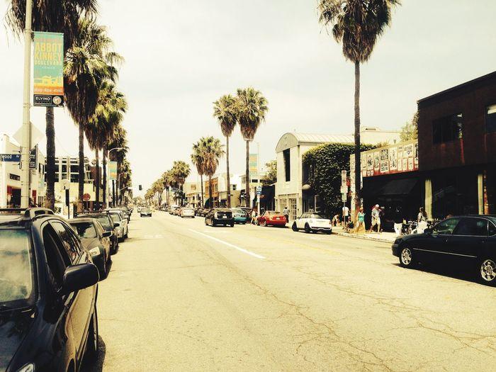 Abbot Kinney Abbot Kinney Los Angeles, California California USA Venice Beach Palm Trees Street Road